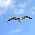 Sea Gull by Karl R. Martin