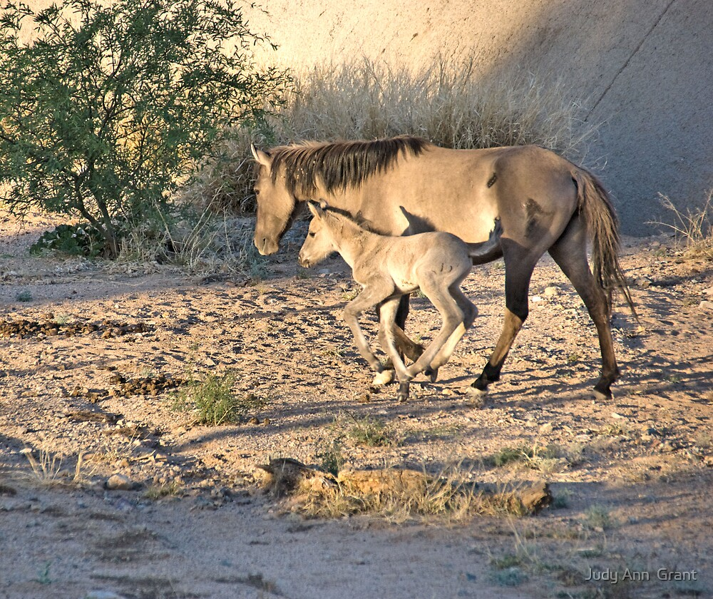 Desert Wild Horses by Judy Grant