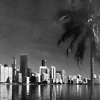 Palm and City by Bill Wetmore