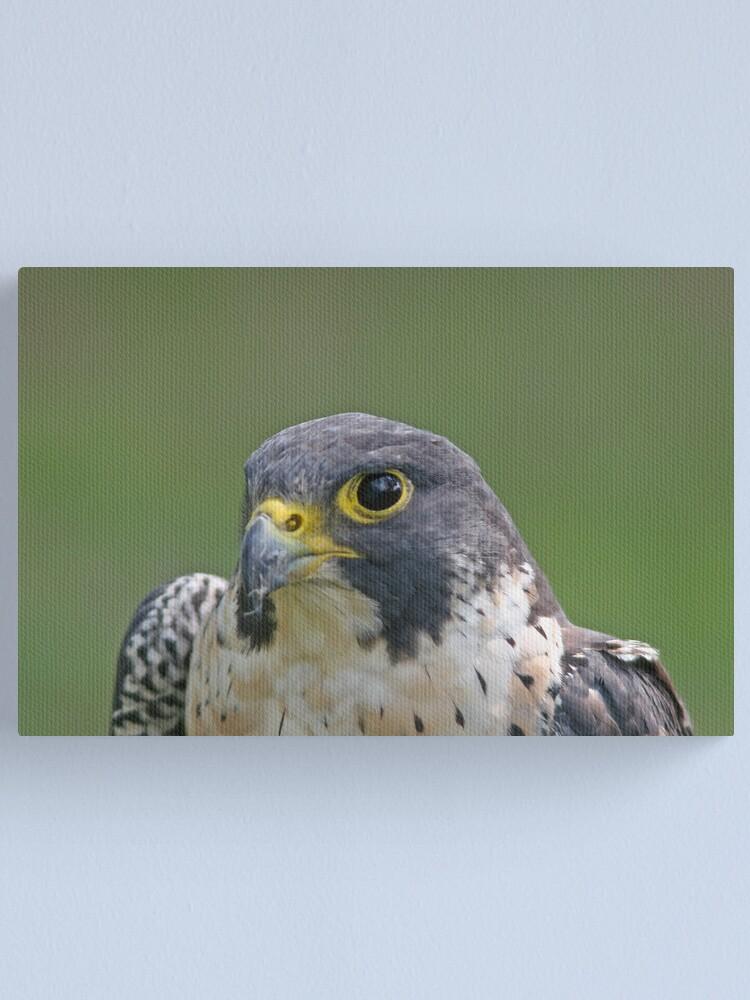 Alternate view of Peregrine Falcon Canvas Print