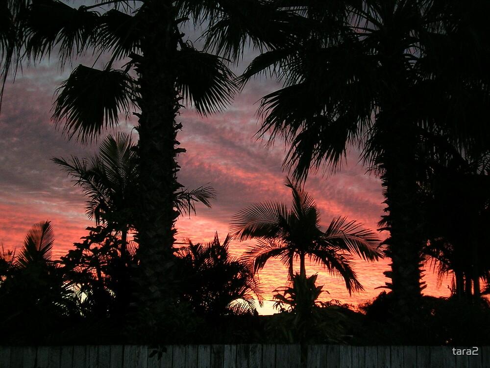 Sunset by tara2
