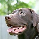 Labrador Retriever by Karl R. Martin