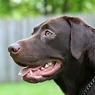 Labrador Retriever by Karl R. Martin