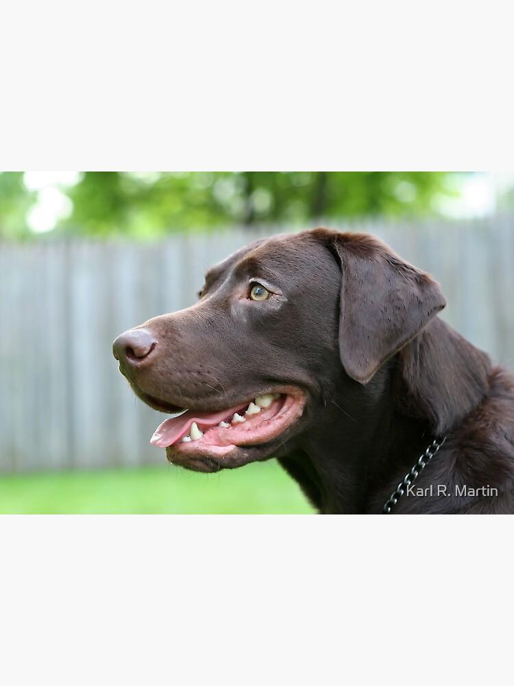 Labrador Retriever by SirEagle