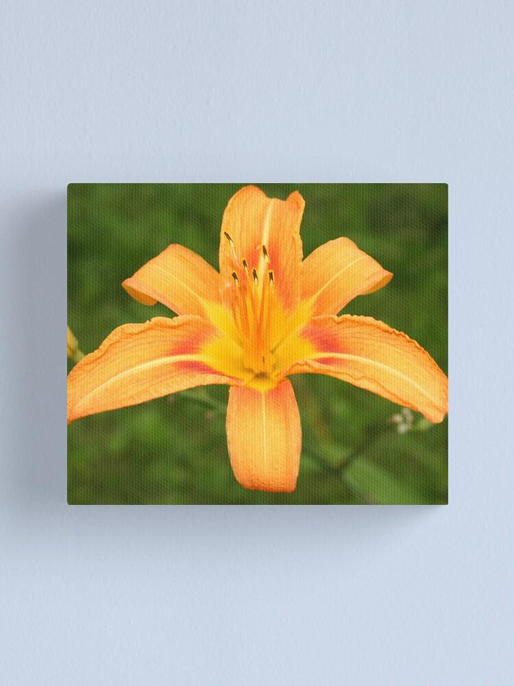 Alternate view of Orange Daffodil Canvas Print