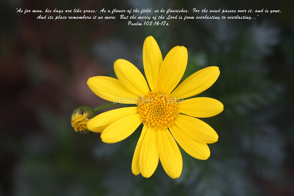 Psalm 103:16-17a by Jennifer  Tate