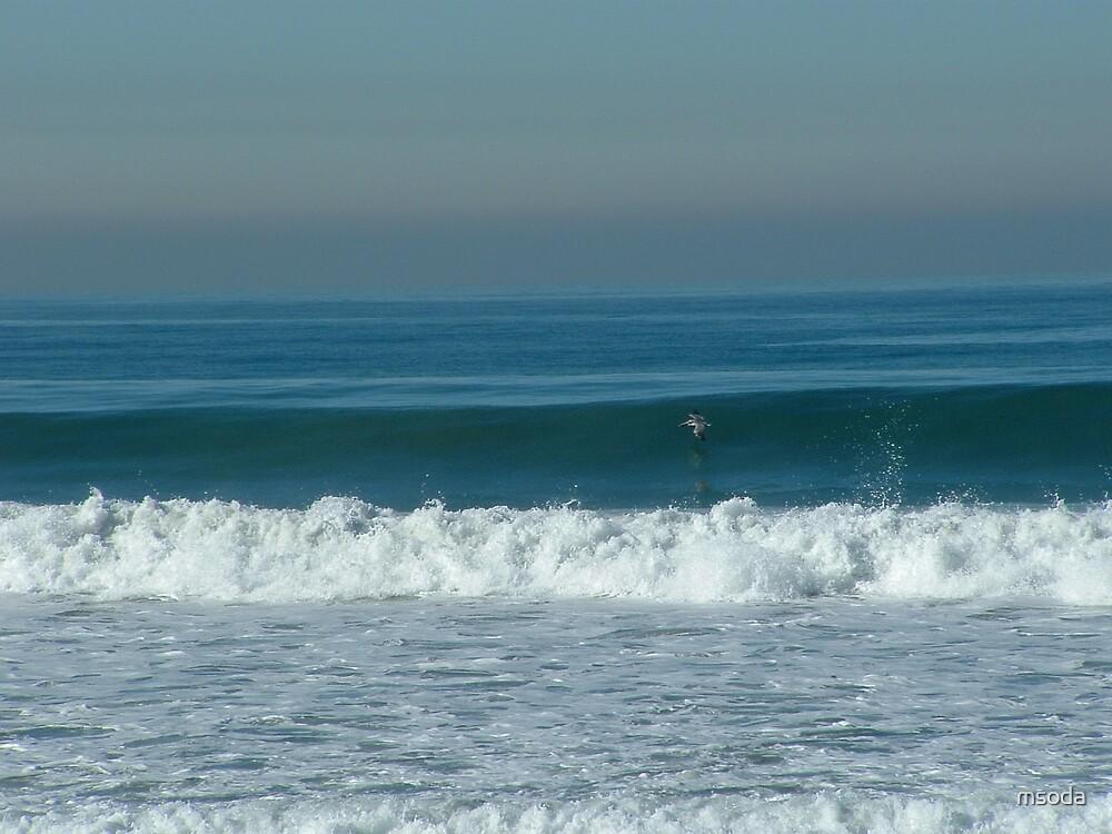 Avian Surfer by msoda