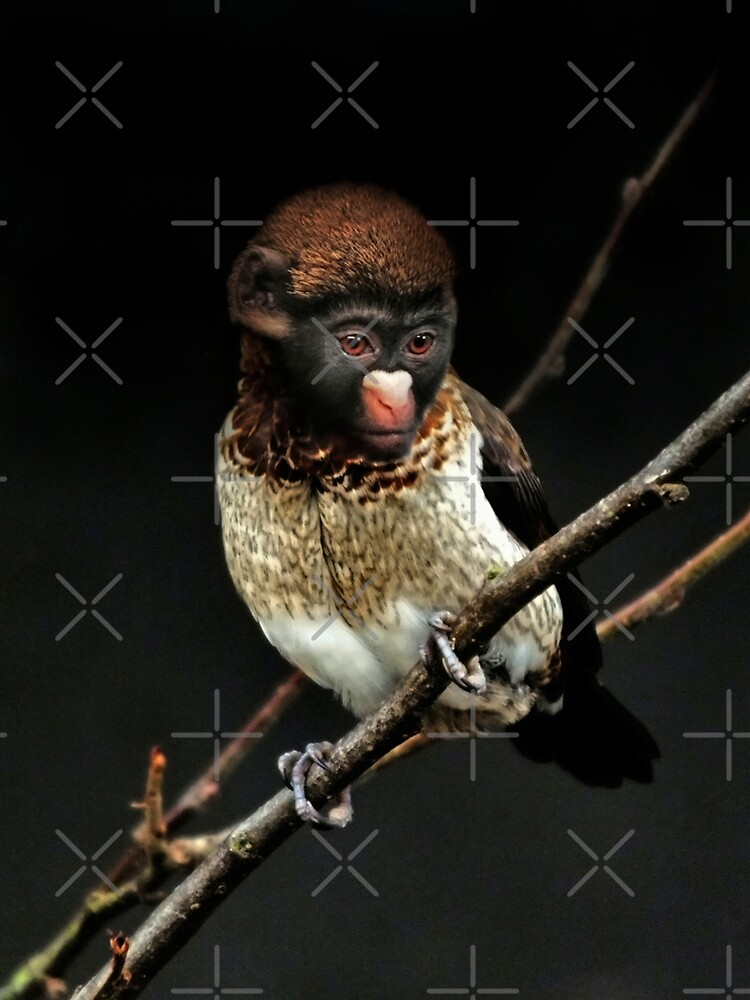 Monkey Finch by Yampimon