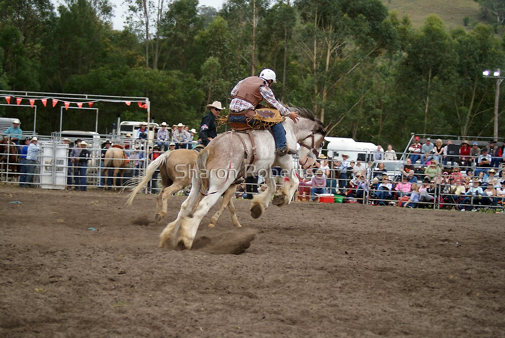 Picton Rodeo BRONC6 by Sharon Robertson