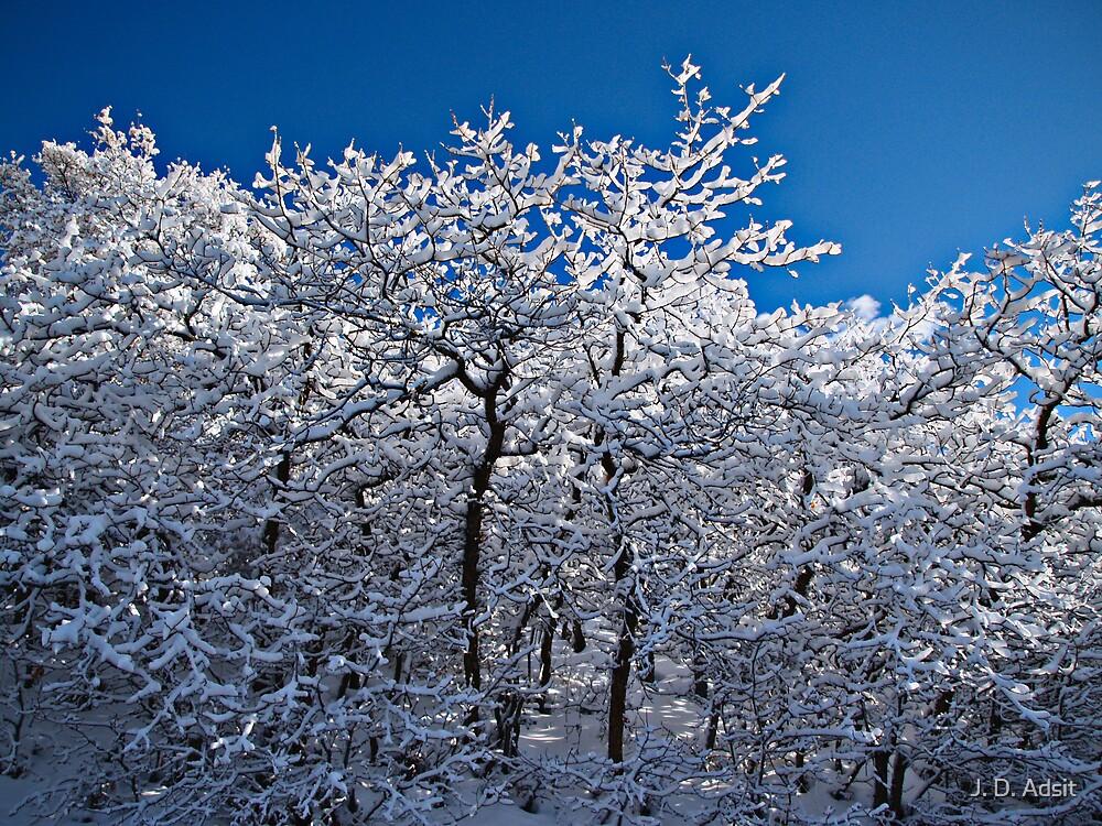 Frosty Forest by J. D. Adsit
