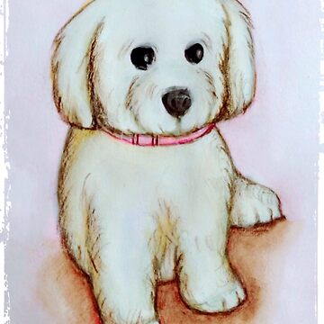 Cute white poodle, year of the dog by Kathryn8