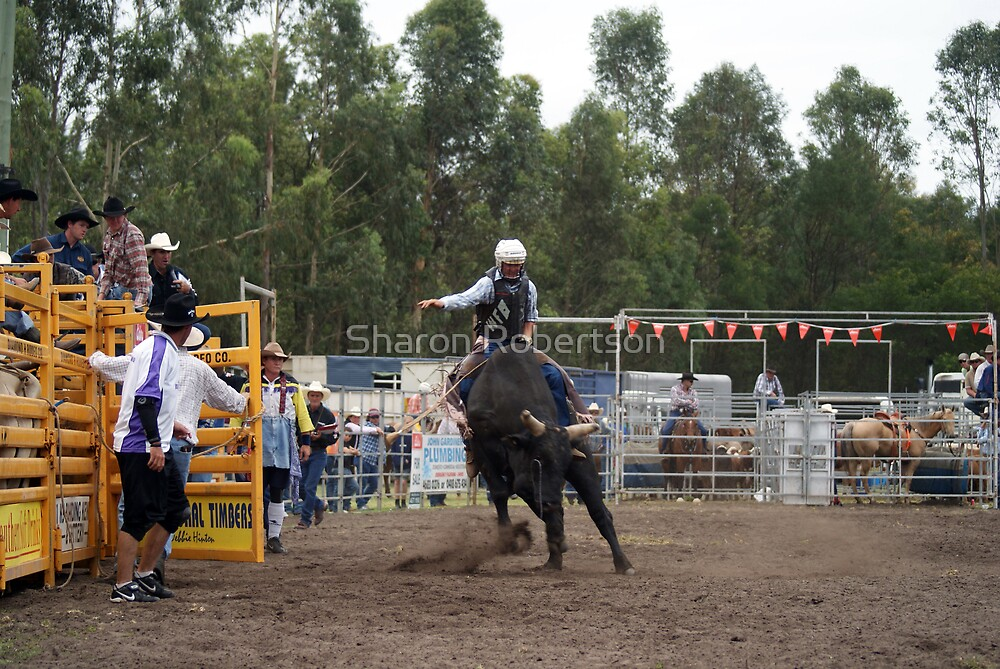 Picton Rodeo BULL9 by Sharon Robertson