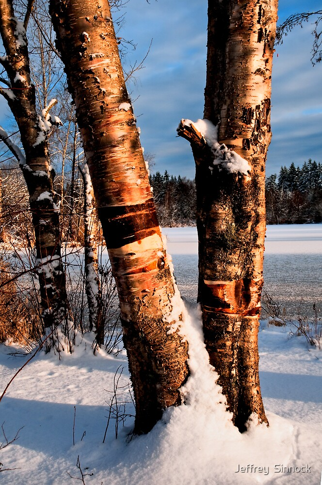 Two trees in snow at sunset by Jeffrey  Sinnock