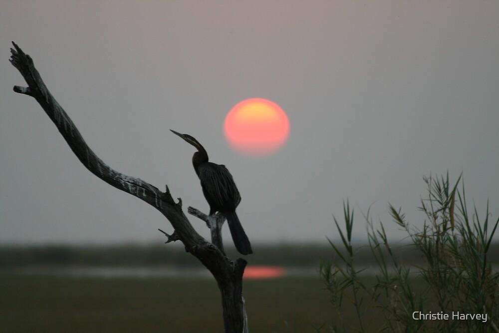 Chobe Sunset by Christie Harvey