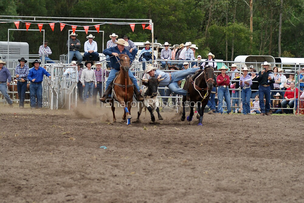 Picton Rodeo STEER6 by Sharon Robertson