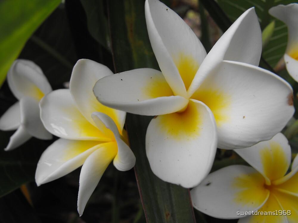 White & Yellow by Carol Field