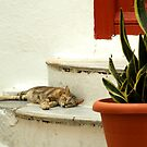 Summer in Mykonos by George Kypreos