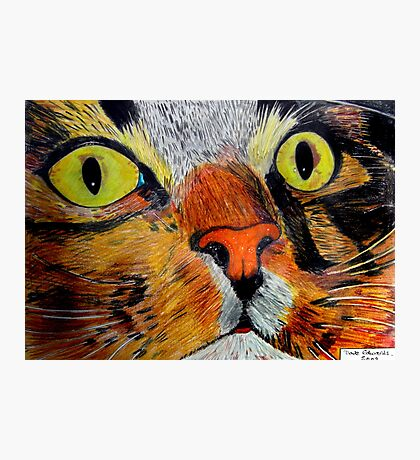 269 - MITCH - DAVE EDWARDS - COLOURED PENCILS & FINELINERS - 2009 Photographic Print