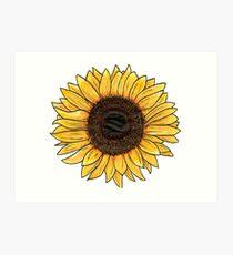 Sonnenblume Kunstdruck