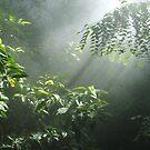 Rain Forrest  by Dene Wessling