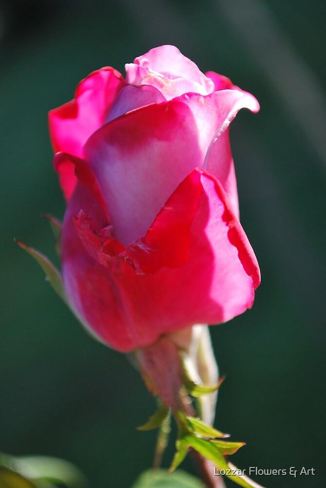 pink rosebud  by Lozzar Flowers & Art