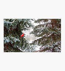 Red Cardinal in Winter Scene Photographic Print