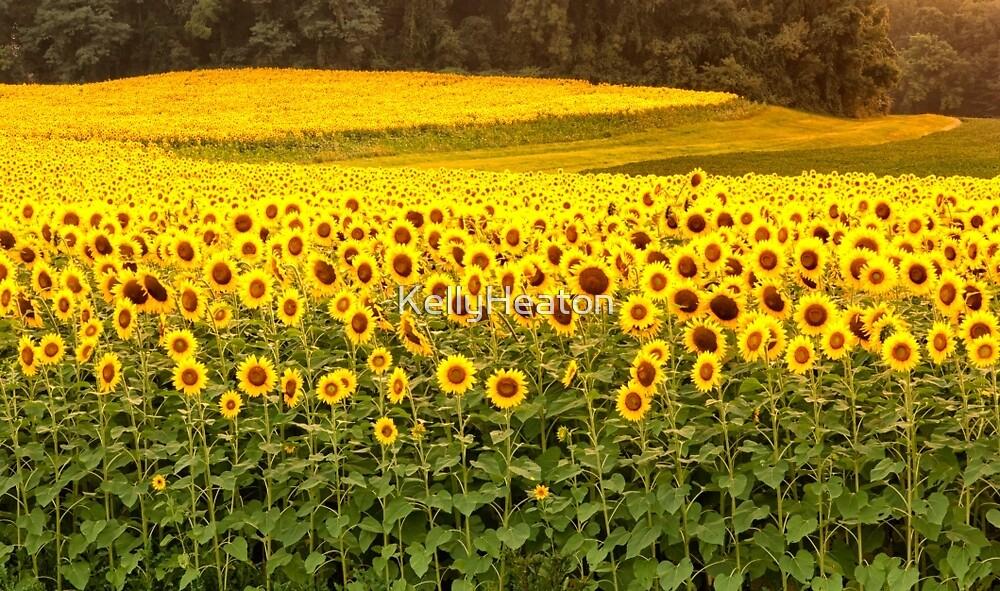 Sunflower Fields by KellyHeaton