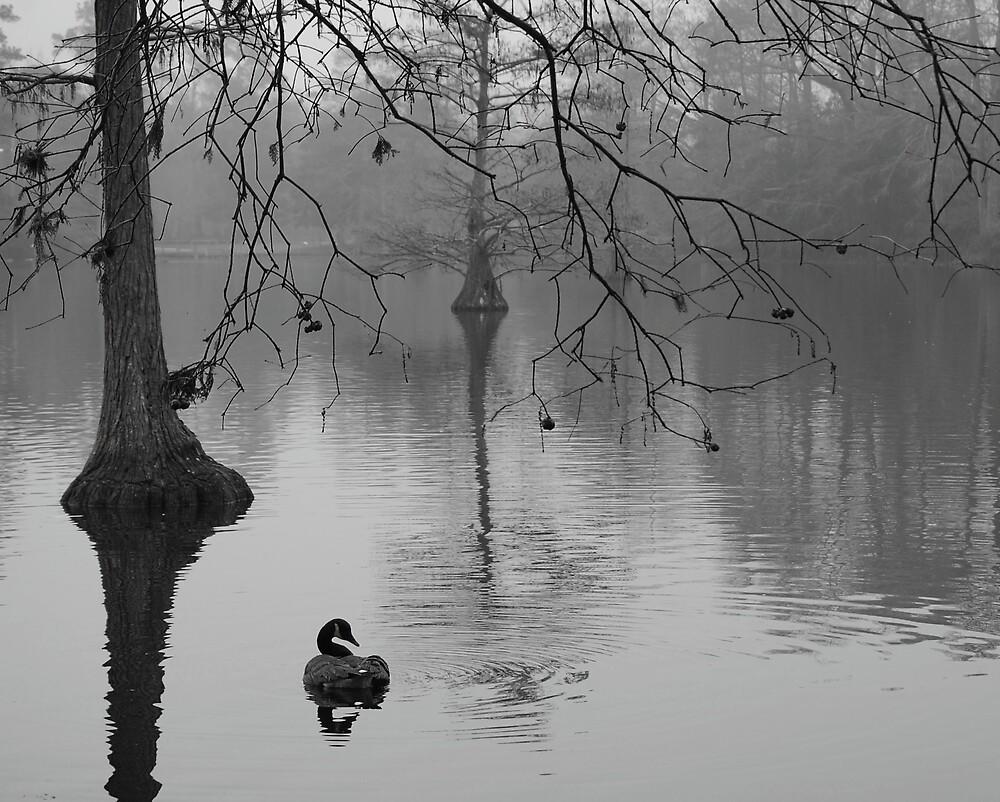 Swan Lake in Sumter SC by dbcarolinagirl