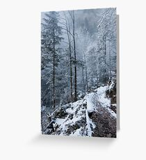 white forest Greeting Card