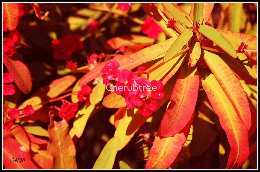 Warm Vibrancy: by Cherubtree