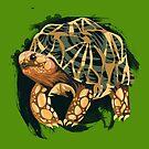Burmese Star Tortoise Illustration  by Maxwbender
