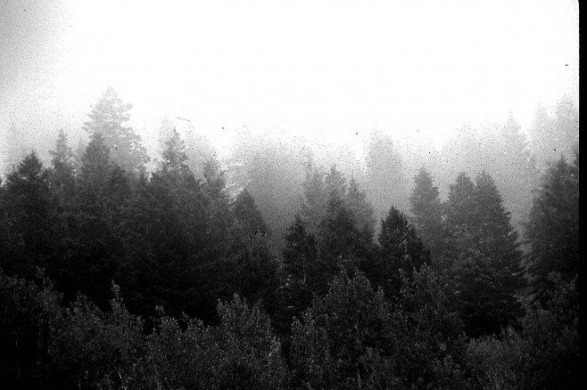 Forest Layers by Dennis Blauer