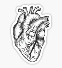 Anatomical Heart (black and white) Sticker