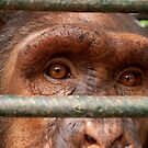 Caged by ApeArt