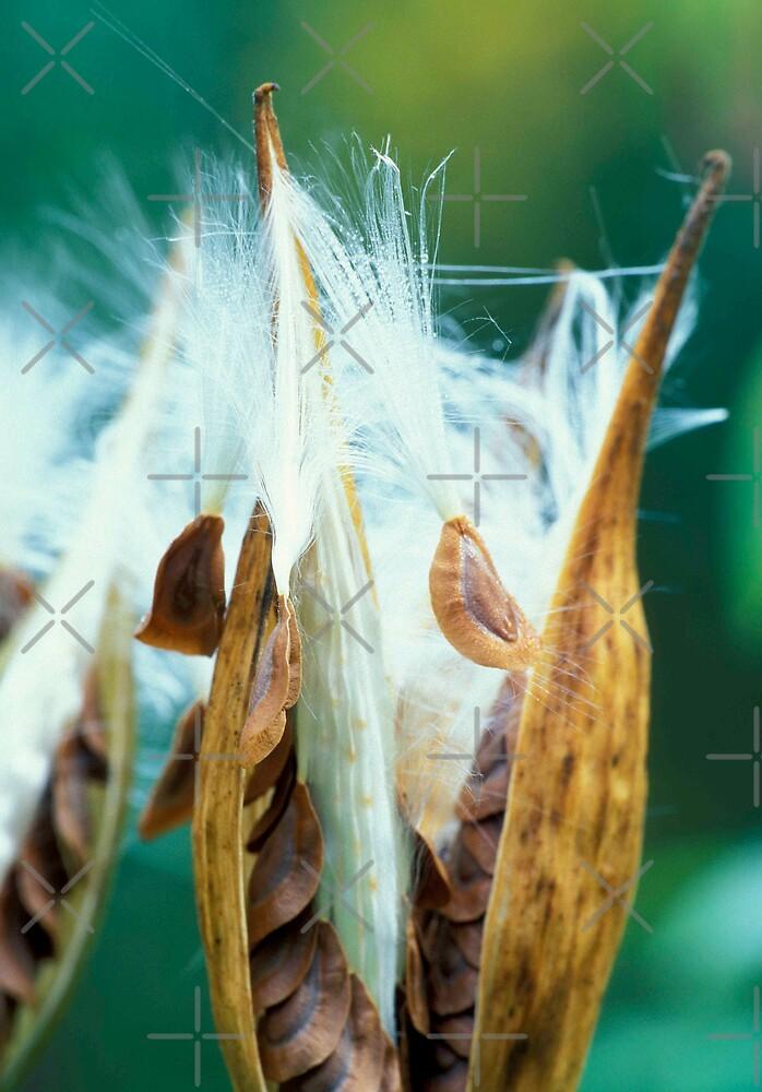 Seeds by Bill Spengler