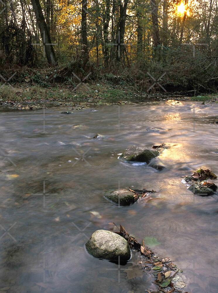 Clinton River at Wolcott Mill  by Bill Spengler