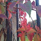 Red leaves by Daniela Cifarelli