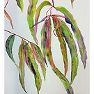 Colourful Gum Leaves by Wendy Sinclair