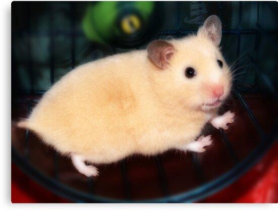 Pipi - the new hamster by George Parapadakis ARPS (monocotylidono)
