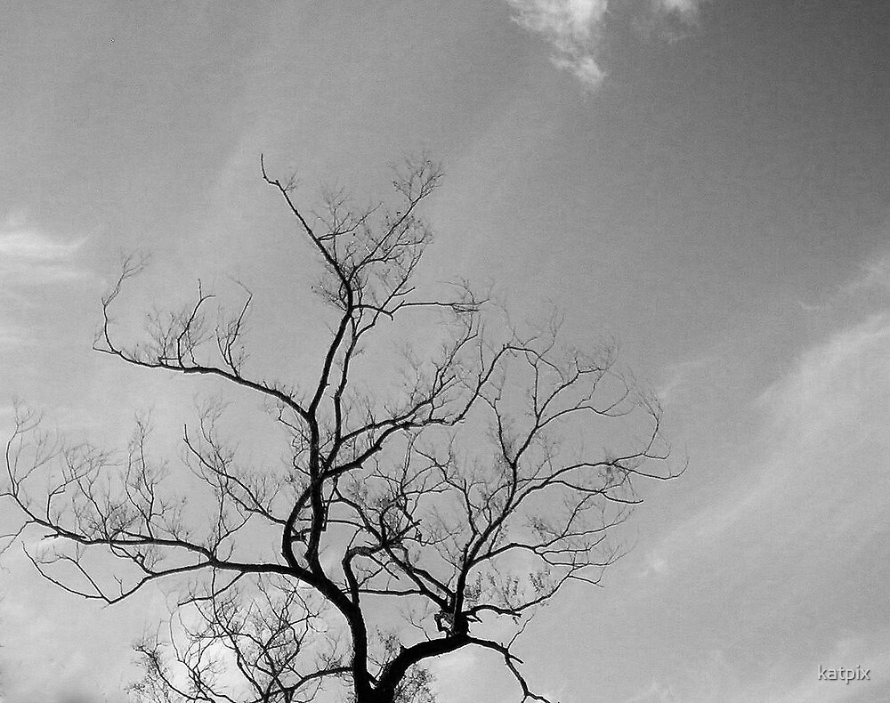 Aginst the Sky by katpix