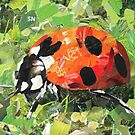 Ladybug on Green by John Wallie