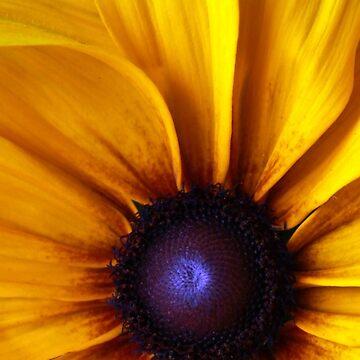Sunflower by ruben