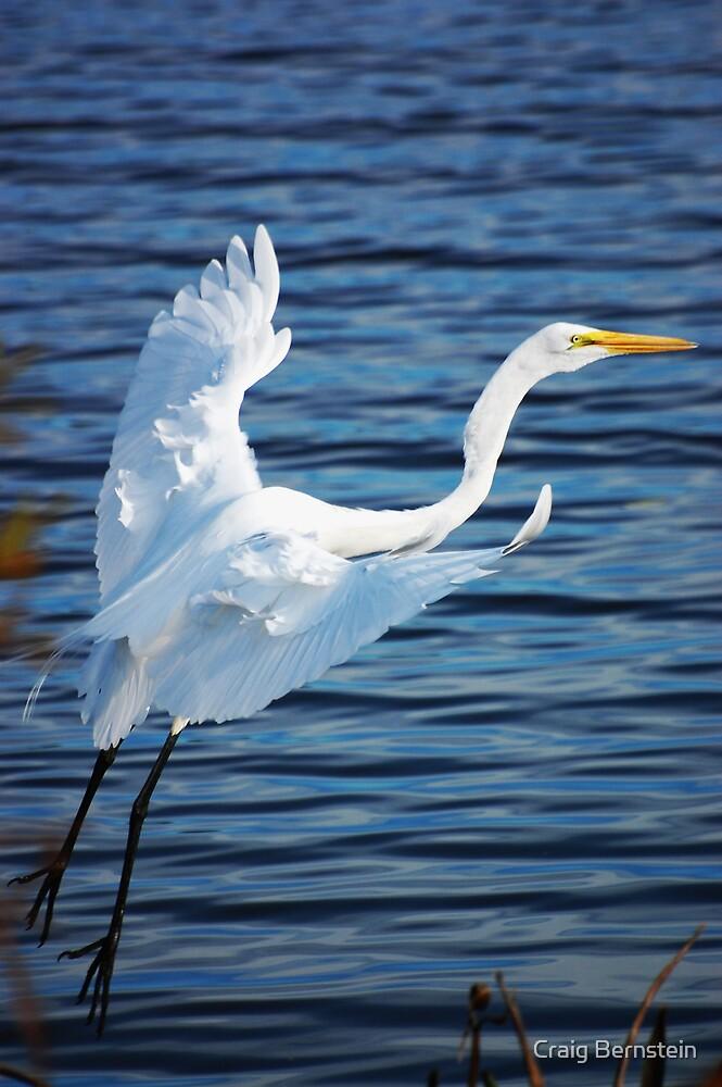 Great Egret in Flight by Craig Bernstein