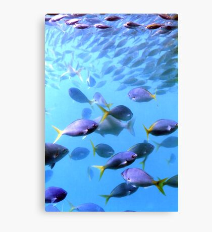Fish of the Great Barrier Reef Canvas Print