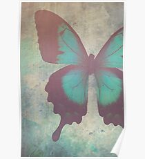 Painted Butterfly Poster