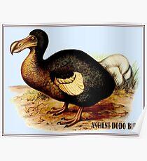 DODO BIRD : Vintage Extinct Species Painting Print Poster