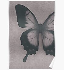 Damask Butterfly Poster