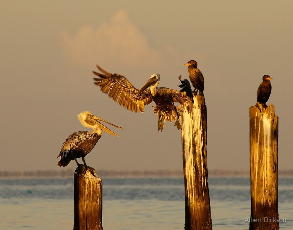 Pelican and Cormorant on the old Ice House Piers 2 by Albert Dickson