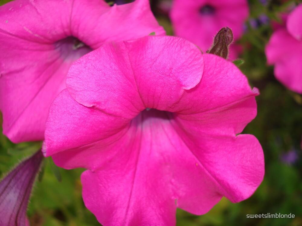 Petunia Pink by sweetslimblonde