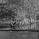 Riverside Trees, Wolfscote Dale by Rod Johnson